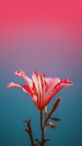 Flower gradient wallpaper