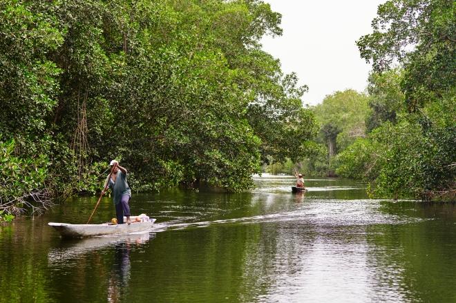 Apple_Mangroves_Man-Canoe-River_04222019